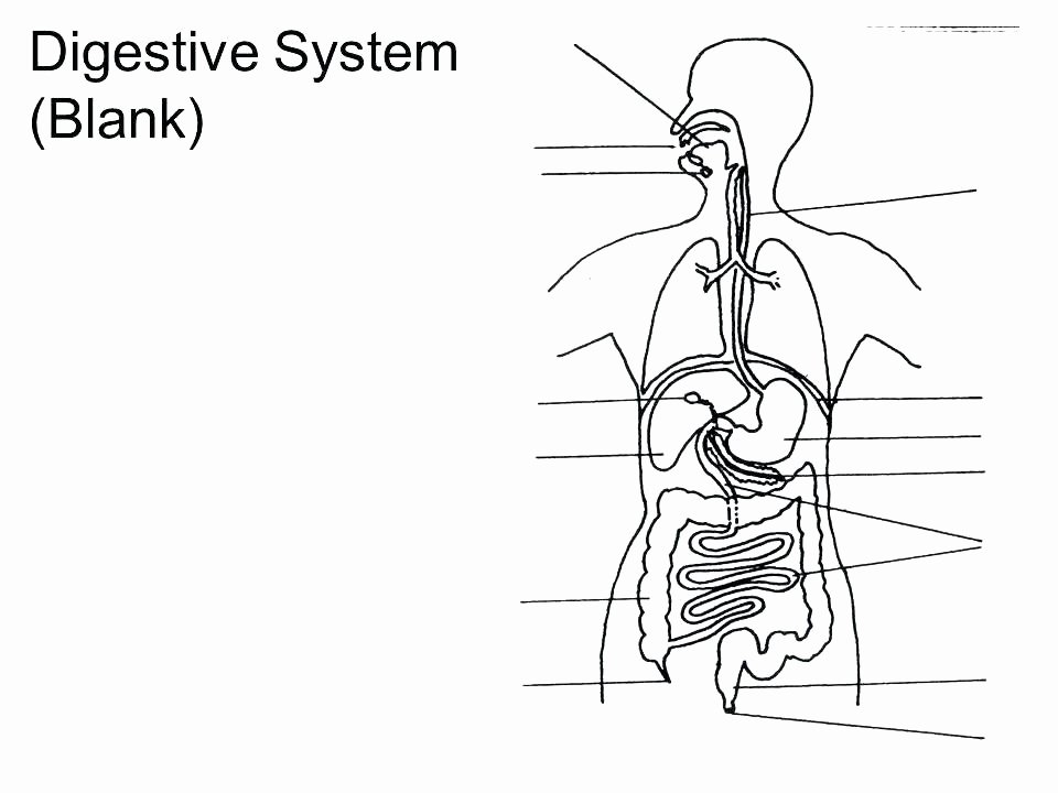 Digestive System for Kids Worksheets Awesome Grade Science Worksheets Free Food Chain for First Worksheet