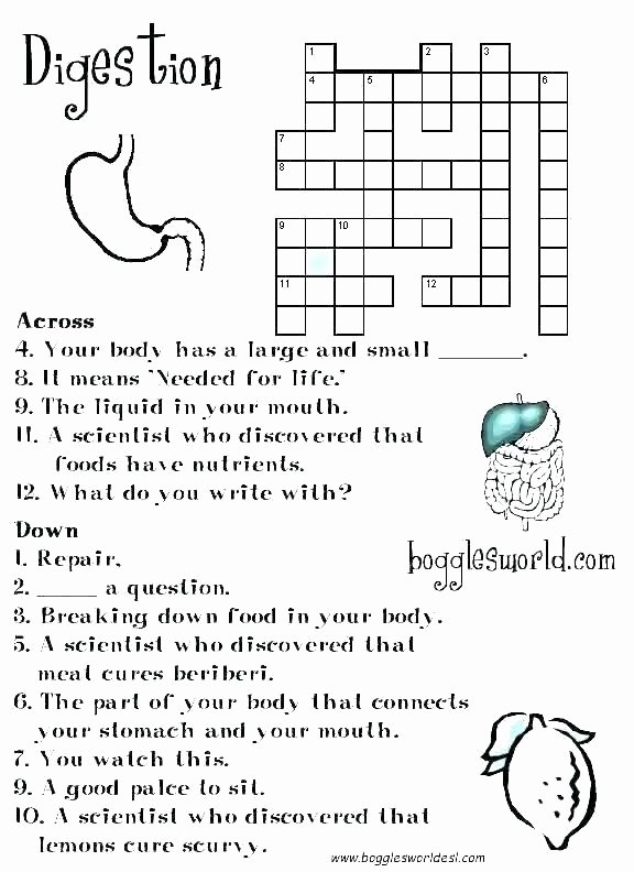 Digestive System Worksheets Middle School Human Digestive System Coloring Pages – Rosaartur