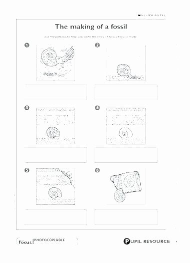 Dinosaur Worksheets Kindergarten Free Fossil Worksheets