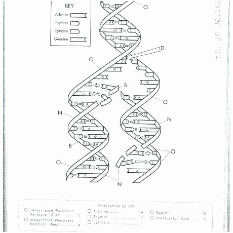 coloring worksheet middle school replication unique sheet answers of new release pictures dna hair grey
