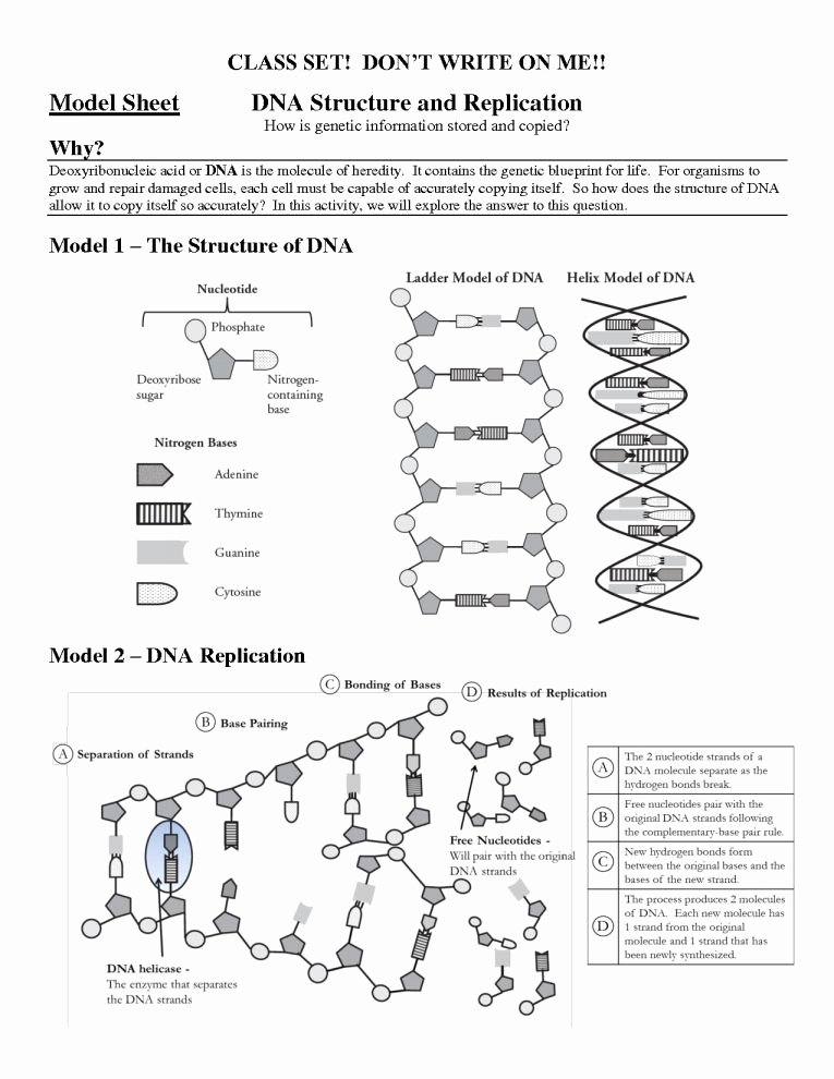 Dna Structure Worksheet High School Unique Protein Structure Pogil Worksheet Answers