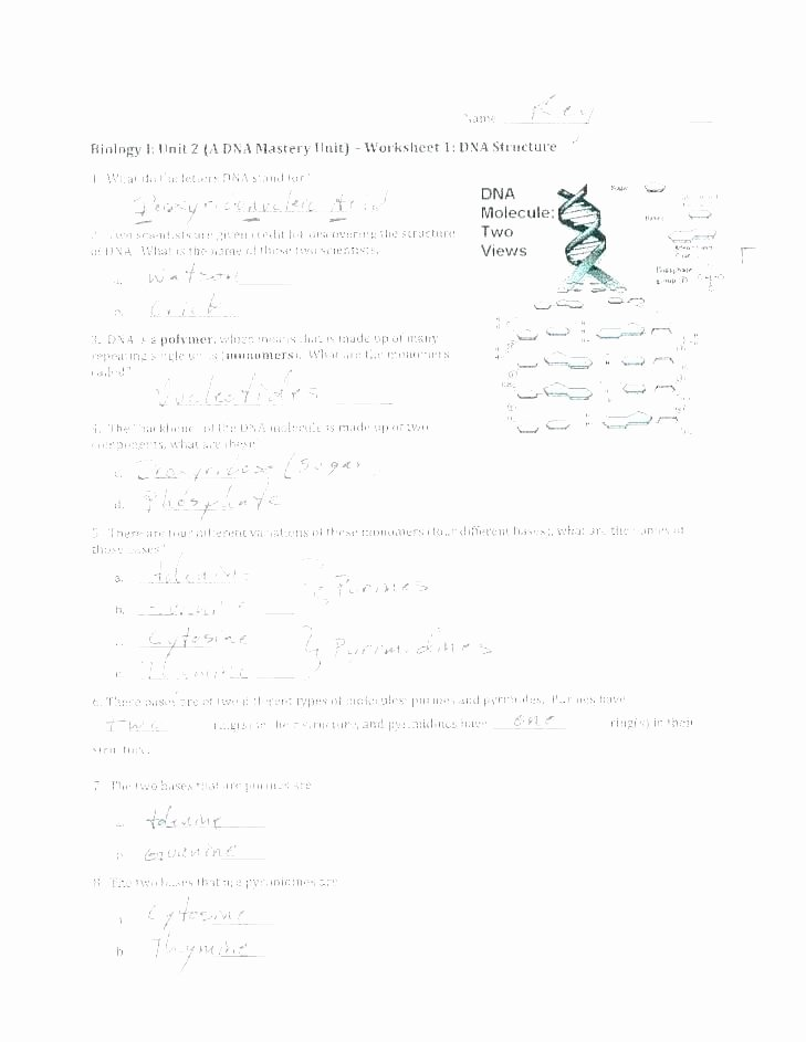 Dna Worksheet Middle School Pdf Fresh Drawing Conclusions Worksheets for All Conclusion as Well