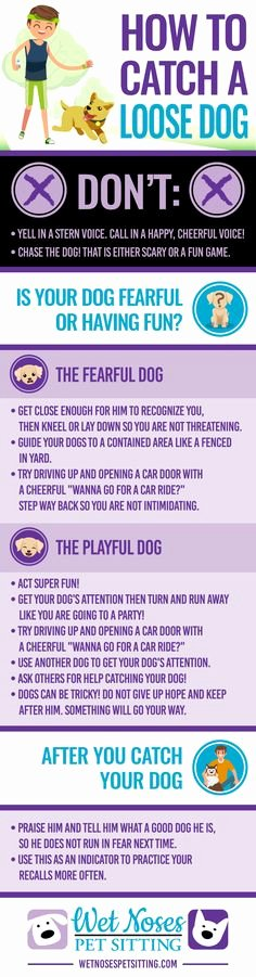 Dogs Decoded Worksheet Lovely 103 Best for the Dog Lovers Images In 2019
