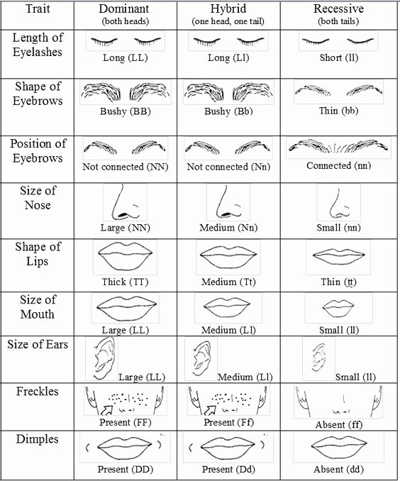 Dominant and Recessive Traits Worksheet New Grupo De Grupodegenetica On Pinterest