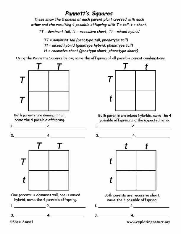 heredity punnett squares worksheets square lesson plans planet genetics problems worksheet