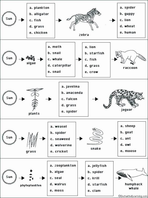 Ecology Worksheets Middle School Ecology Worksheets