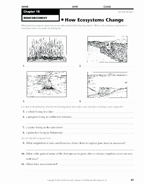 Ecosystem Worksheet Answer Key Inspirational Worksheet Metamorphic Rocks 1 Editable with Answers