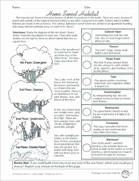 Ecosystem Worksheets 4th Grade Ecosystem Worksheets 5th Grade