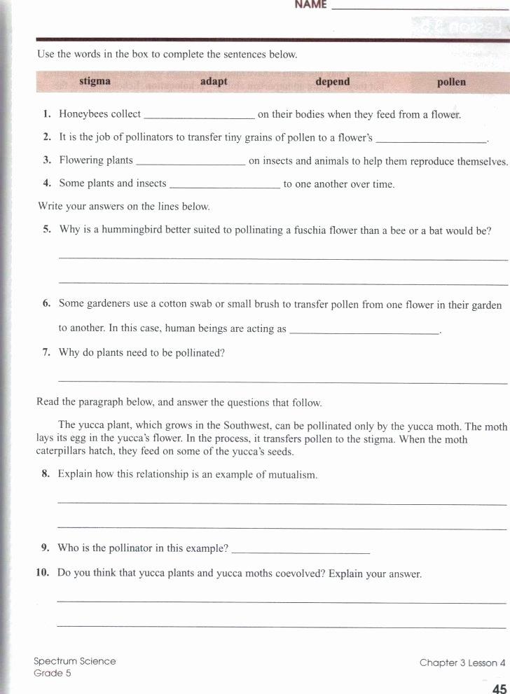 Ecosystem Worksheets 4th Grade Ecosystem Worksheets 5th Grade