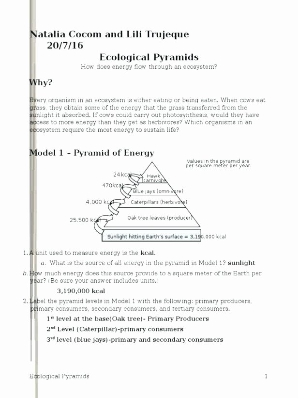 post ecosystem workshs grade on energy pyramid activities ecological w medium for free worksheets 5th science herbivore carnivore omnivore wor