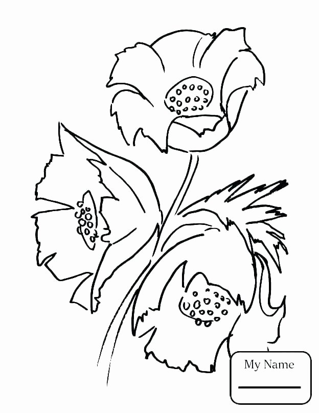 Ee Ea Ey Worksheets State Bird Drawing and Flower Coloring Page Poppy Sheet