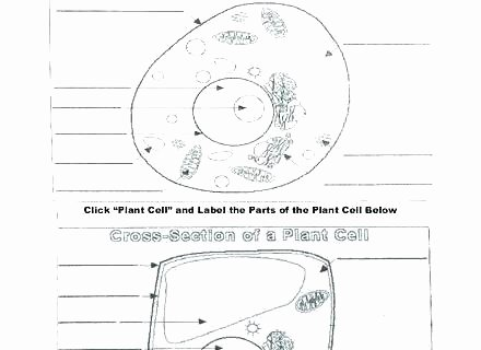 Elementary Cell Worksheets Fresh Technical Drawing Worksheets