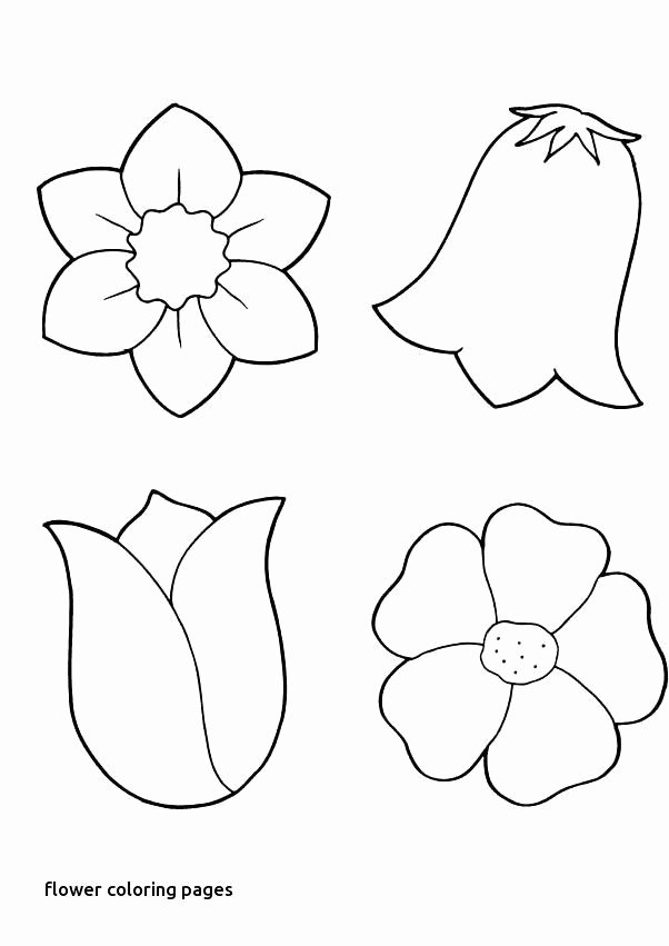 Fall Worksheets for Kindergarten √ Kinder Coloring Worksheets and Colouring Sheets for
