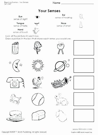 First Grade social Studies Worksheets Unique 1st Grade Science Worksheets