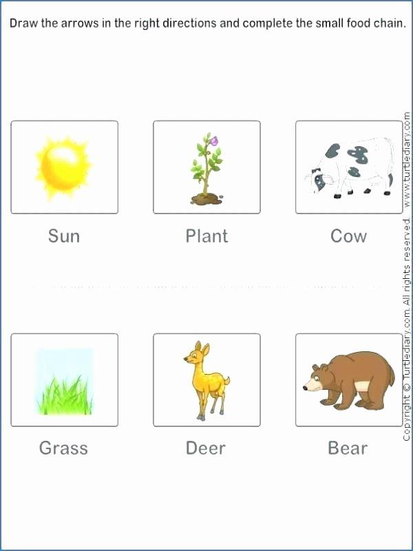 Five Food Groups Worksheets Grade 2 Science Worksheets Food N Worksheet Reading
