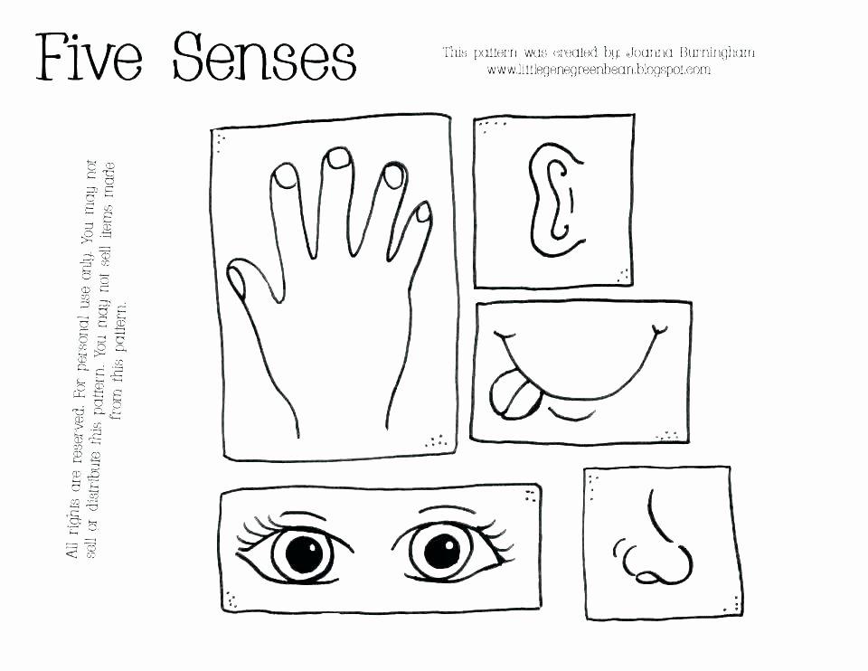 Five Senses Kindergarten Worksheet Five Senses Worksheets for Kindergarten