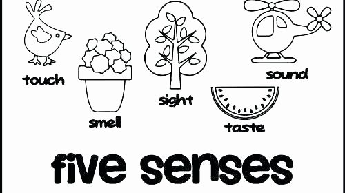 Five Senses Worksheets for Kindergarten 5 Senses Coloring Pages