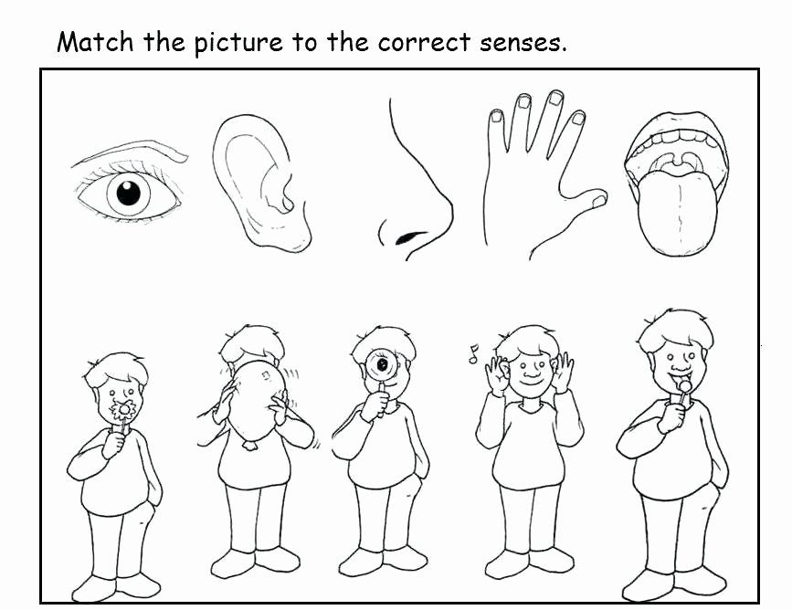 Five Senses Worksheets for Kindergarten 5 Senses Worksheet for Kids and Worksheets Kindergarten
