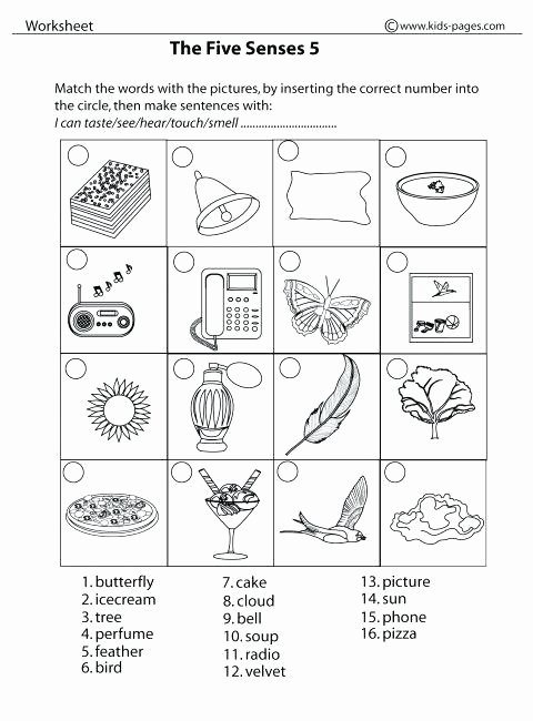 Five Senses Worksheets for Kindergarten Free 5 Senses Worksheet for Kids Crafts and Worksheets