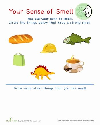 Five Senses Worksheets for Kindergarten Pinterest