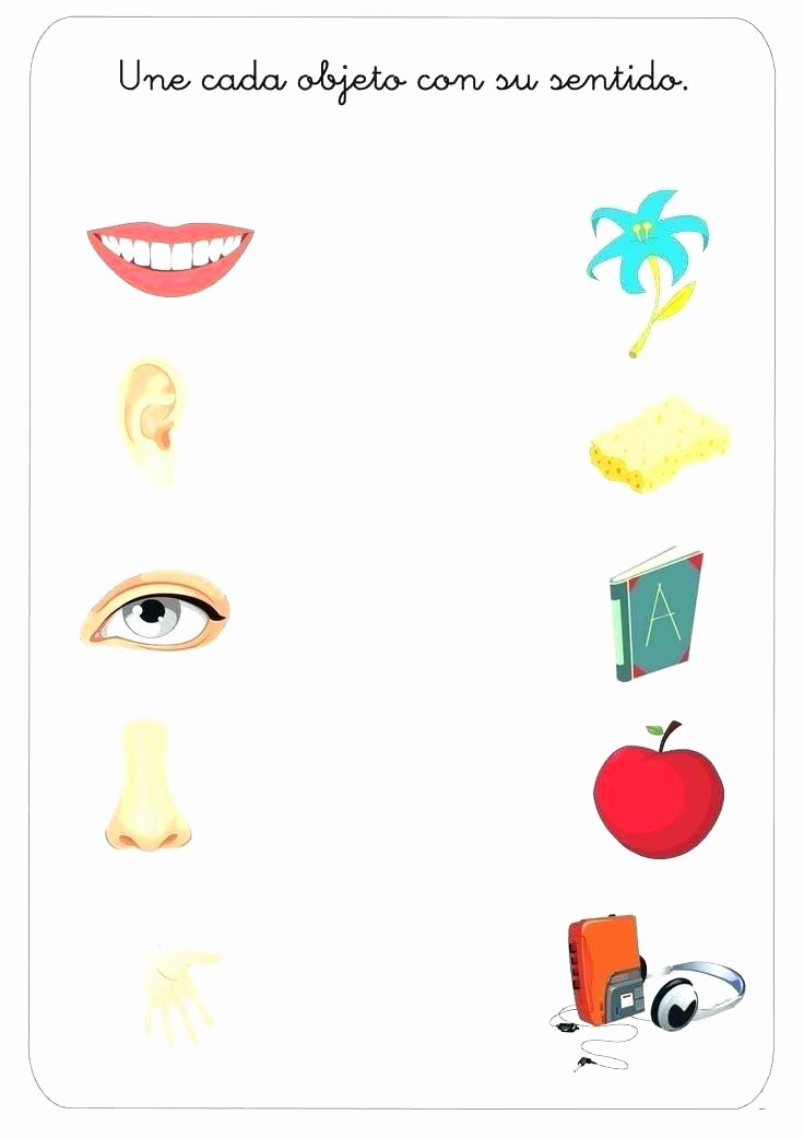 Five Senses Worksheets Kindergarten Kids Preschool Science Worksheets Kindergarten Free Design Ks2
