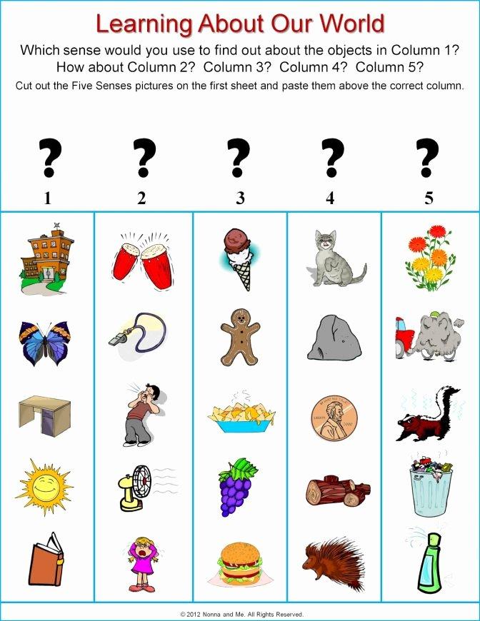 Five Senses Worksheets Kindergarten the Five Senses for Kids Worksheetfunction Sumif Vba 5