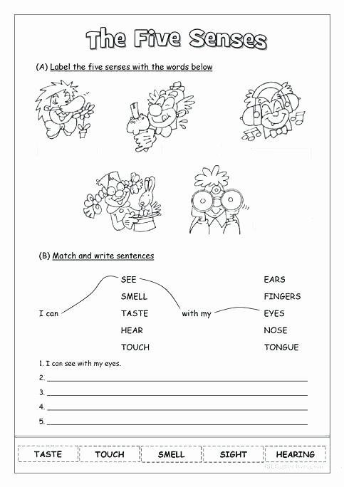Five Senses Worksheets Pdf Awesome 5 Senses Worksheet Teaching Preschool Five Number Sense Free