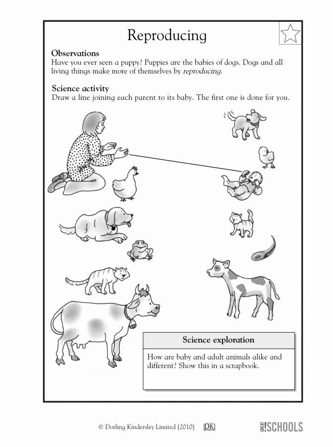Five Senses Worksheets Pdf Luxury Five Senses Worksheet for Kids Free Kindergarten Learning
