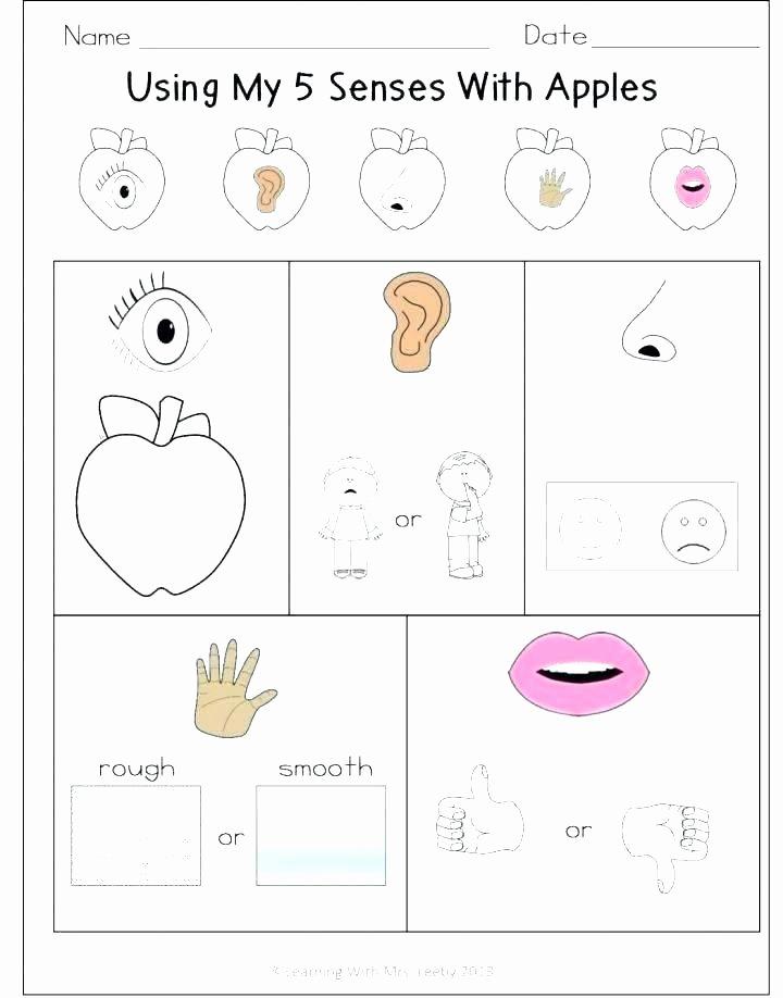 Five Senses Worksheets Pdf Unique Worksheets for Grade Printable Kindergarten Science Full