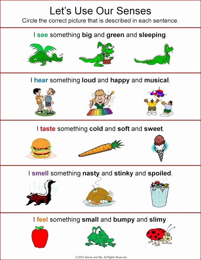 Five Senses Worksheets Preschool Best Of Five Senses Worksheets for Kindergarten