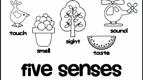 Five Senses Worksheets Preschool Best Of the Five Senses 2 Worksheet the Five Senses 2 5 Senses