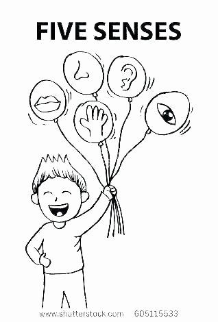 Five Senses Worksheets Preschool Inspirational 5 Senses Coloring Pages