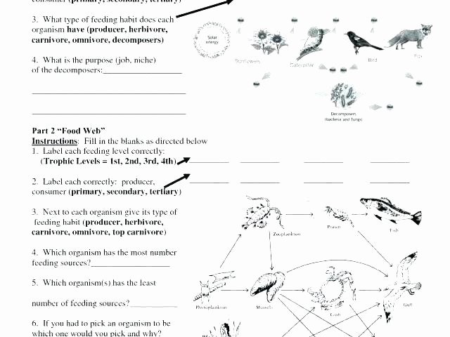 Free 8th Grade Science Worksheets Food Chain Worksheets 3rd Grade – Petpage