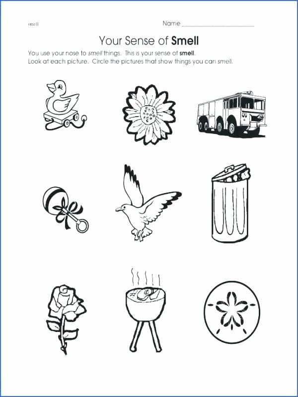 Free Five Senses Worksheets Sensory Images Worksheets