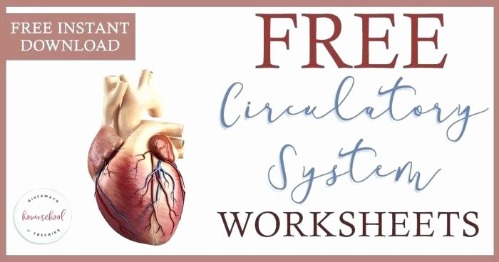 Free Human Body Systems Worksheets Cardiovascular System Drawing at Free for Personal