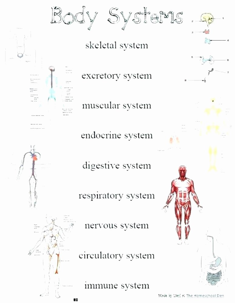 Free Human Body Systems Worksheets Free Respiratory System Worksheets