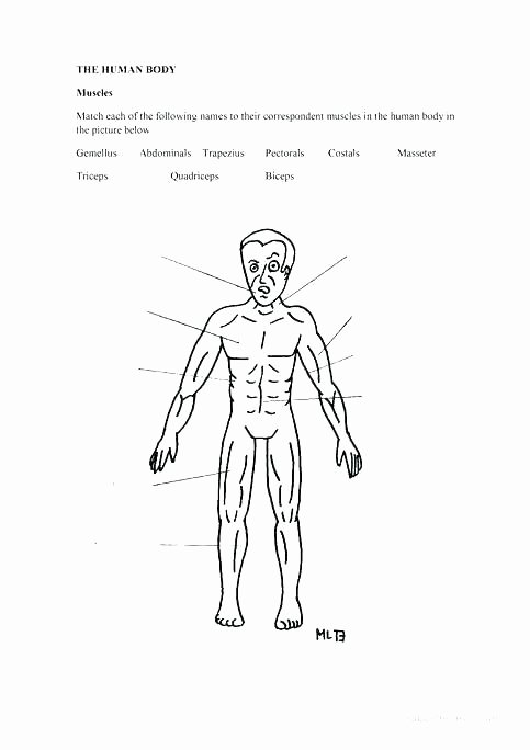 Free Human Body Systems Worksheets Human Body Printable Worksheets