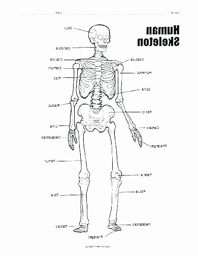Free Human Body Systems Worksheets Printable Human Body