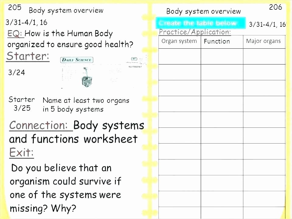 Free Human Body Worksheets Body Systems and Functions Worksheets