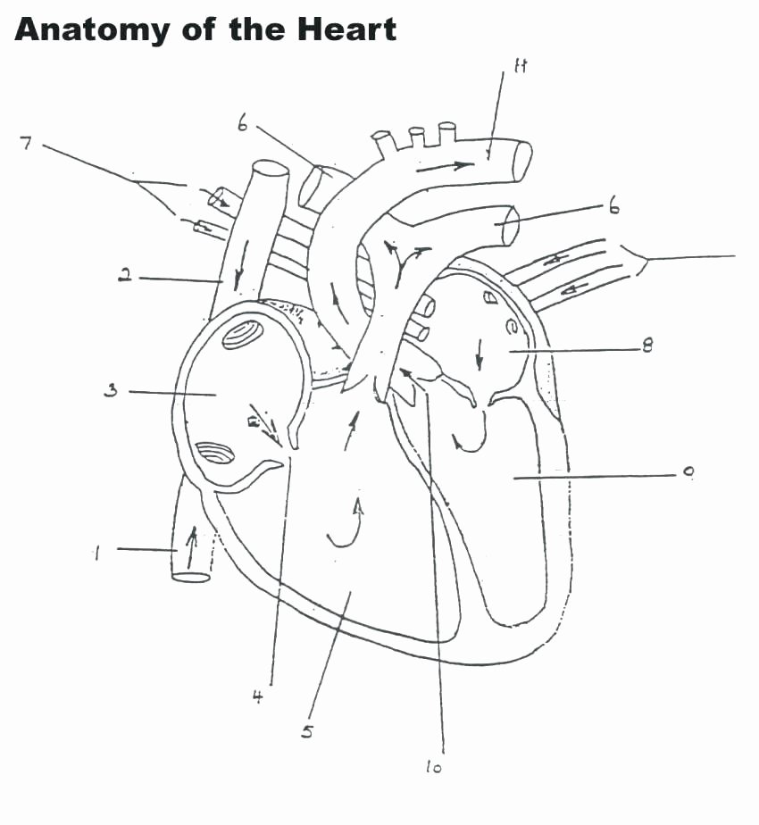 Free Human Body Worksheets Human Heart Worksheets