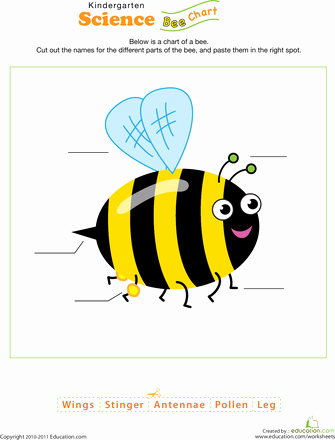 Free Insect Worksheets Bee Science Bee Activities