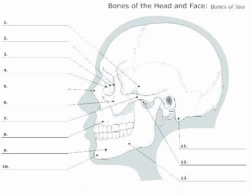anatomy worksheets blank anatomy worksheets drawn bones free printable horse fill in printable anatomy labeling worksheets muscles