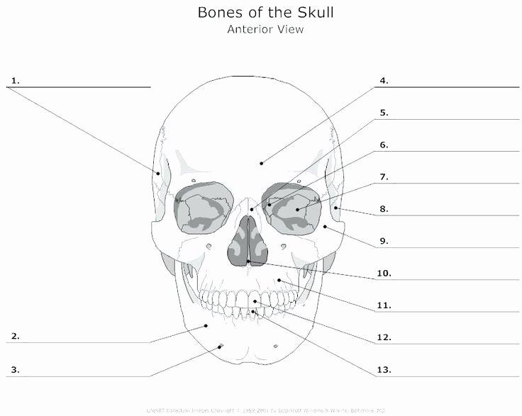Free Printable Anatomy Worksheets Anatomy Worksheets