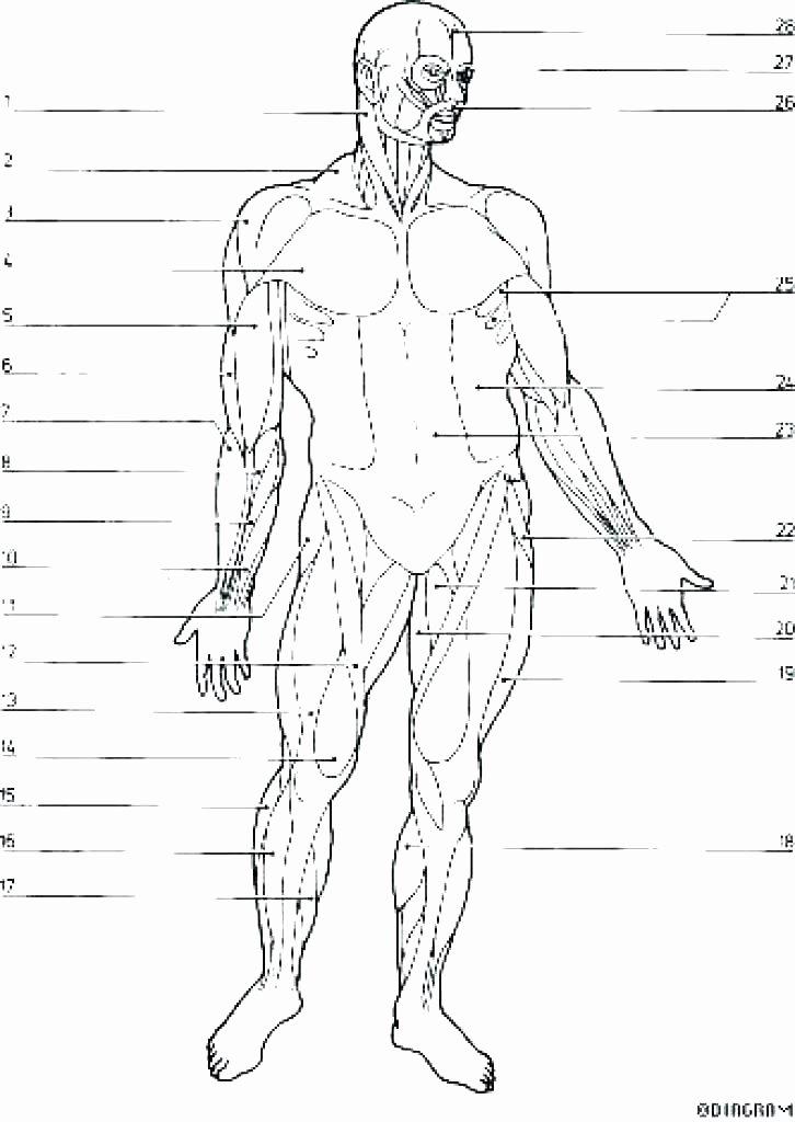 Free Printable Anatomy Worksheets Coloring Anatomy Book Pages Free Printable Muscle Muscles