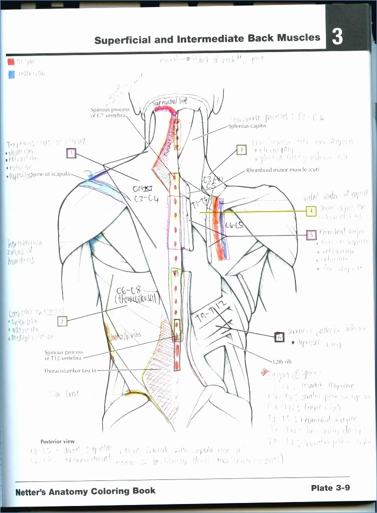 Free Printable Anatomy Worksheets Human Anatomy Coloring Pages