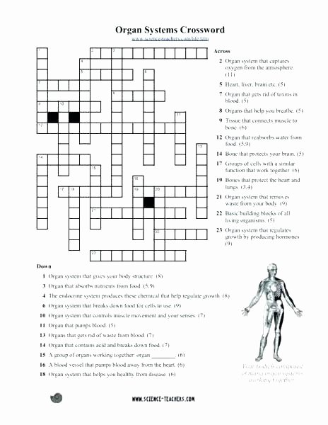 Free Printable Anatomy Worksheets Human Body Printable Worksheets