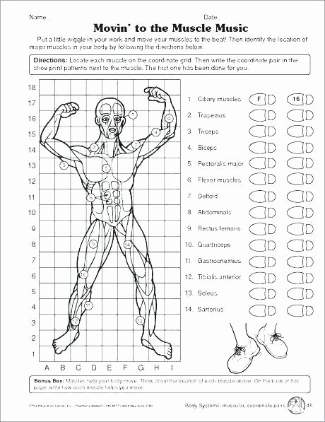Free Printable Anatomy Worksheets Human Body Worksheets for First Grade Anatomy Coloring Pages