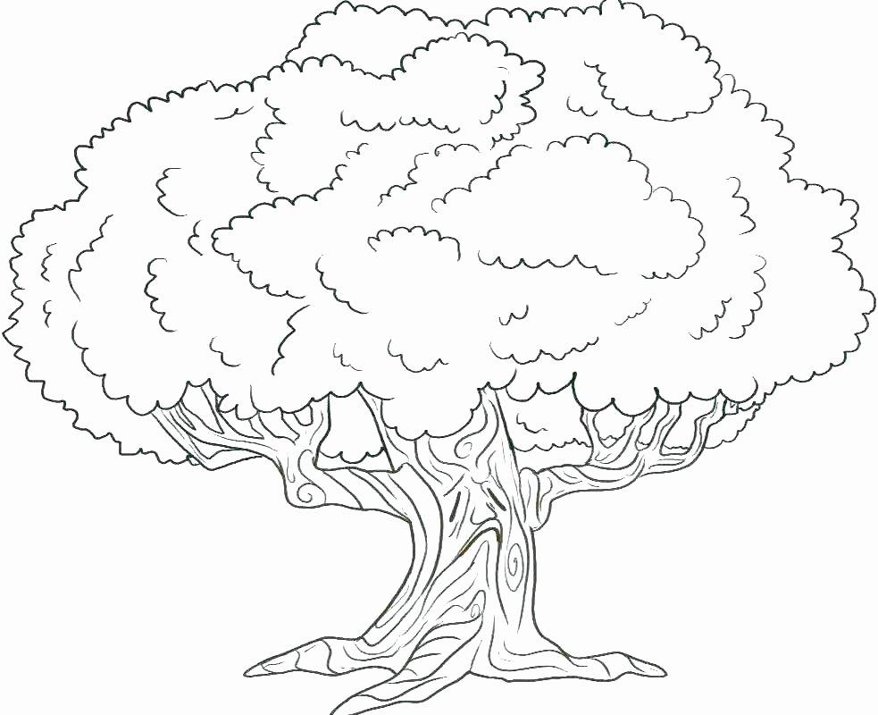 Free Printable Apple Worksheets Best Of My Family Tree Free Printable Worksheets – Dstic