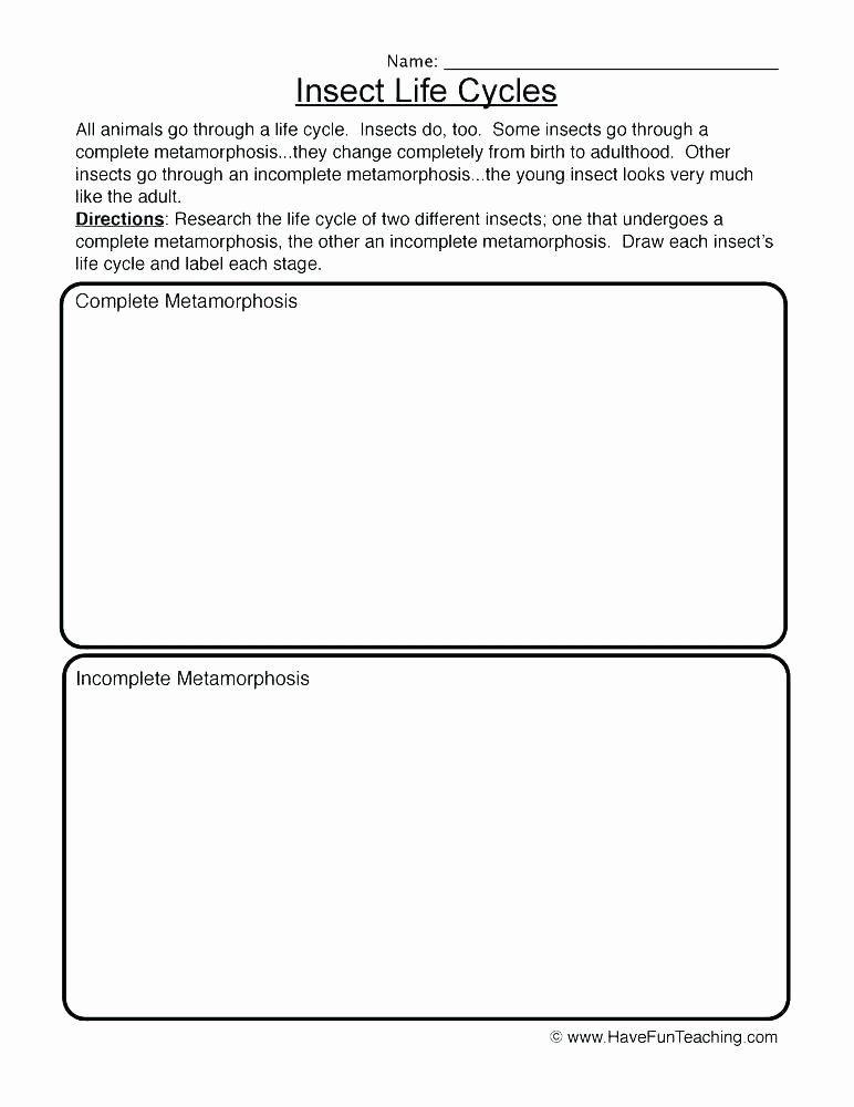 Free Printable Ecosystem Worksheets Energy Worksheet Category Page 7 Free Printable Ecosystem