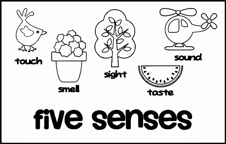 five senses for kids five senses coloring pages five senses for preschoolers printable coloring 5 senses coloring sheets preschool 5 worksheets for grade 1 puter